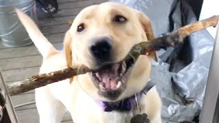 Cute and Funny Animal Videos to Start Your Weekend!