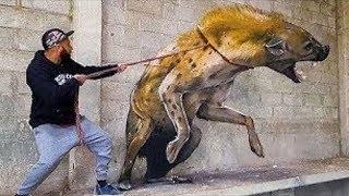 दुनिया के 10 सबसे अनोखे पालतू जानवर। 10 Most Unusual Pets in the World.
