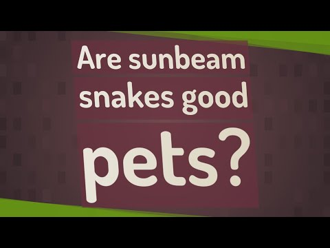 Are sunbeam snakes good pets?