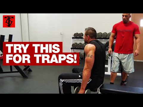 Seated Dumbbell Shrug