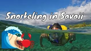 preview picture of video 'Exploring and Snorkeling Around a Tiny Island | Savai'i, Samoa'