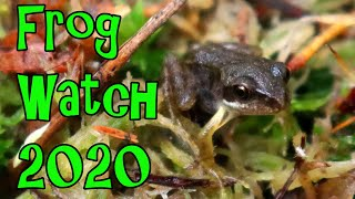 The First Frogs and What to Feed Them - Frog Watch 2020