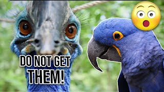 20 Reasons why you should not buy Hyacinth Macaw
