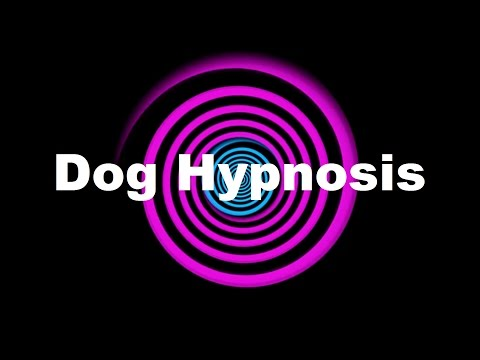 Dog Hypnosis (Requested)