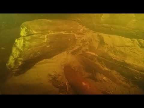 Эксклюзив: В Великом Новгороде найден самый древний из известных мостов
