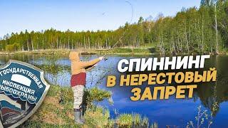 Можно ли ловить щуку на живца в период запрета