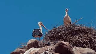preview picture of video 'Storks Castel © | Mahneshan, Zanjan'