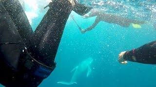 Sunreef Mooloolaba Swim with Whales season update August 2017 - P&O Cruises