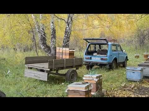 вывоз пчёл с лесного точка осень 2014