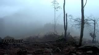 Video pazgřivec -  horror (ambient)