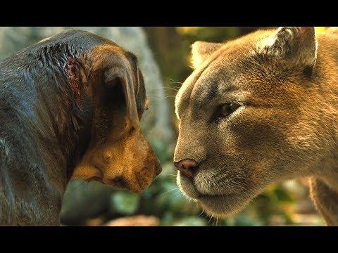流浪狗救了一只猫,1年后发现,这是狮子!