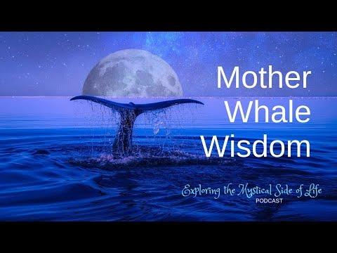Mother Whale Wisdom