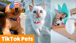 TikTok Pets That Will Make You Smile | Funny Pet Videos