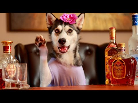 Videos Of Animals We Love Dogs 3 - Funny Pet Videos - Ultimate Cute and Funny Dogs