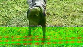 Hund Xenia schmeckt Apfel