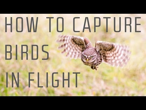 how to capture birds in flight wildlife photography tutorial by first man photography