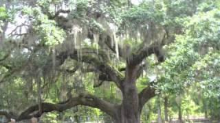 Sensitive Stories of the Plantations of South Carolina