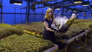 Rośliny akwariowe Karel Rataj