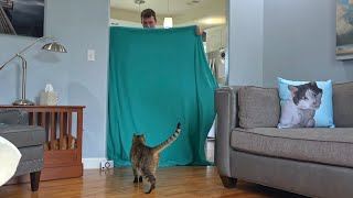 Cat Reacts To Magic Trick With Blanket