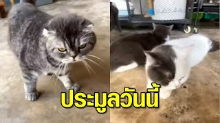 เปิดประมูลวันนี้ 'น้องแมว 6 ตัว' ของกลางแก๊งค้ายา 'กุ๊ก ระยอง'