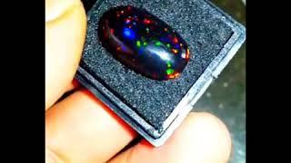 Black Opal Banten Super Classs Siap Kontes