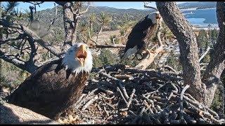 Big Bear Eagle Cam ~ Intruder Flies Past The Nest ~ Shadow & Mrs Alert w/ SLO MO  1.2.19