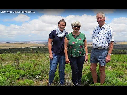 On the farm: The making of Organic Honeybush Tea
