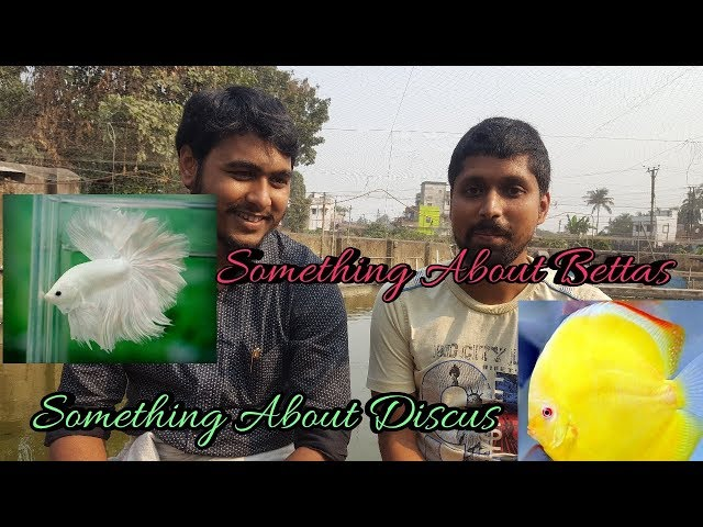 Talking About Betta & Discus with Subh's Betta..