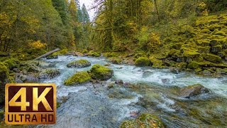 Beautiful Nature Video in 4K (Ultra HD) - Autumn River Sounds - 5 Hours Long
