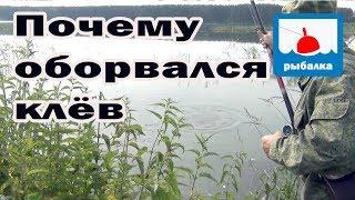 Почему, бывает, вдруг перестаёт клевать рыба_отчёт о рыбалке