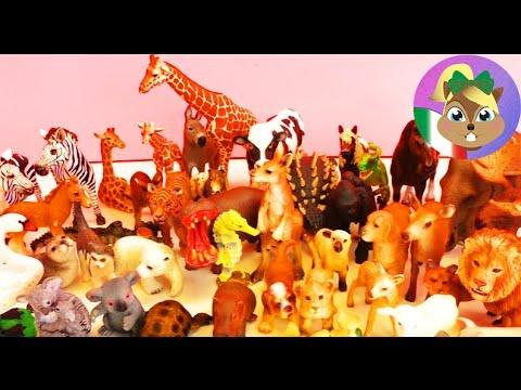 Schleich Video – Riassunto degli animali della Schleich: Zoo, fattoria, foresta e Dinosauri Review