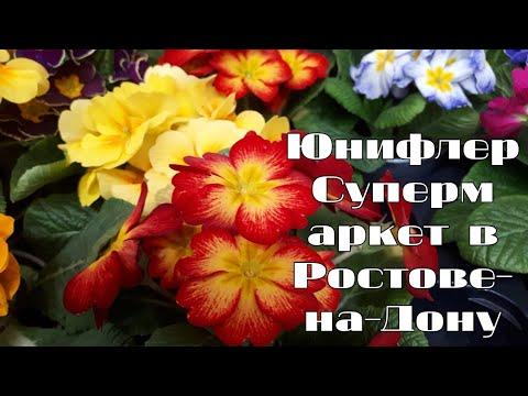 Супермаркет растений и цветов.Обзор ассортимента комнатных цветов.