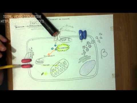 La cancelación de la insulina en la diabetes tipo 2