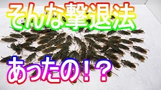 【衝撃】目からウロコのゴキブリ撃退法!!そんなのあり!?驚愕の効能、裏技とは【知らないと損】雑学!