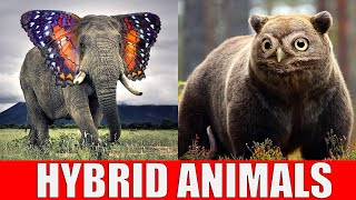 Animals That Don't Exist - Hybrid Animals