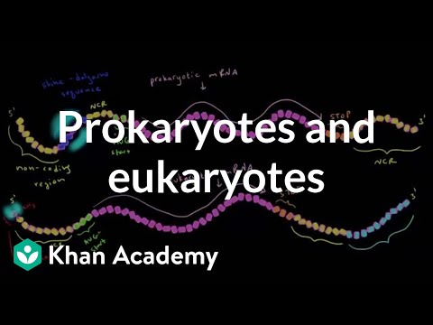 Differences in translation between prokaryotes and eukaryotes (video