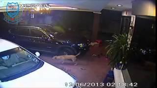 preview picture of video 'Penyamun kena gigit anjing dan tercekup! Taman Bukit Kecil,Bukit Mertajam 2014'
