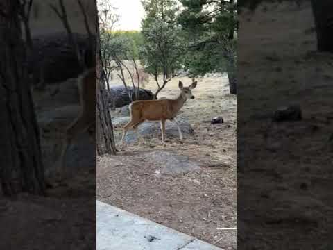Video Of Dixie National Forest Crackfoot Campground, UT