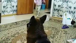 Приколы дети животные