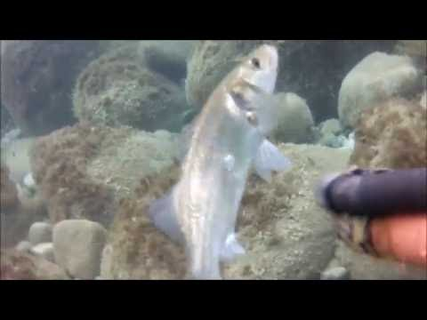 pesca sub ...alba.. isola d elba...basso fondo per tutti