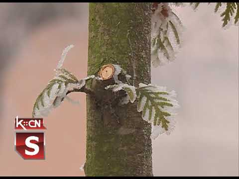 Uništenje drveća u Slovačkom parku u Šidu