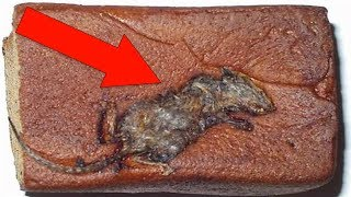 Most SHOCKING Things Found In Your Favorite Foods!