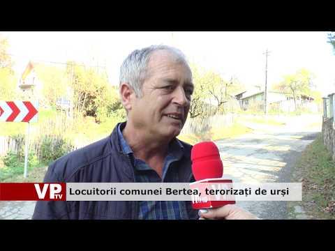 Locuitorii comunei Bertea, terorizați de urși