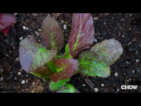 Plant A Salad Box In Your Garden For Fresh Salads Every Night
