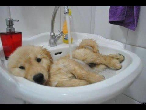 Сладки бебета животни на баня