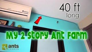I Made a 2-STORY ANT FARM | 40 FEET LONG!!!