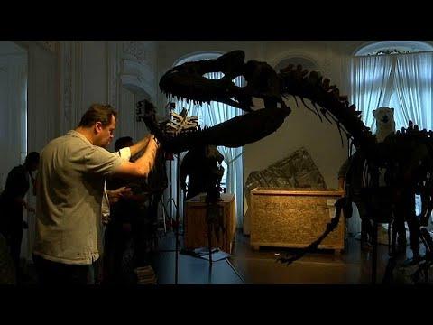 العرب اليوم - ديناصوران للبيع بمزاد علني في باريس الأسبوع المقبل