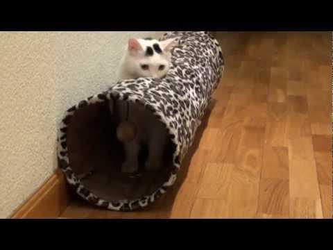 El Tunel para Felinos