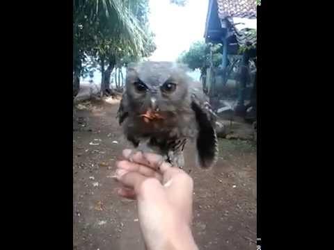 Video CELEPUK skill