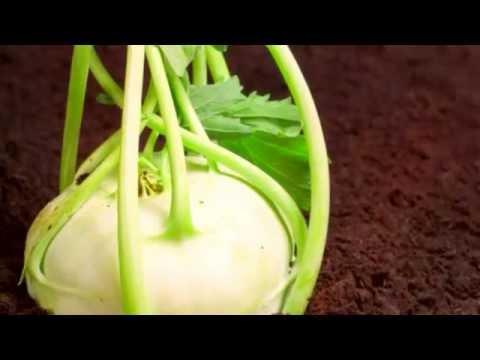 Кольраби польза, самая полезная капуста, капуста кольраби польза для человека.
